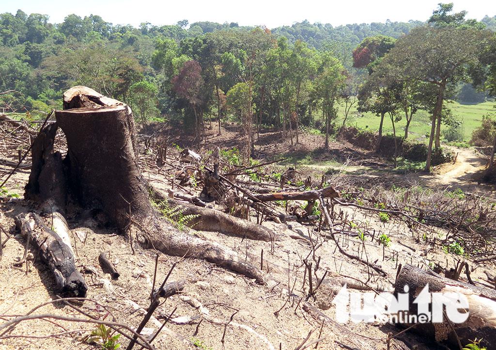 Cận cảnh 44ha rừng bị xóa sổ ở Bình Định - Ảnh 9.
