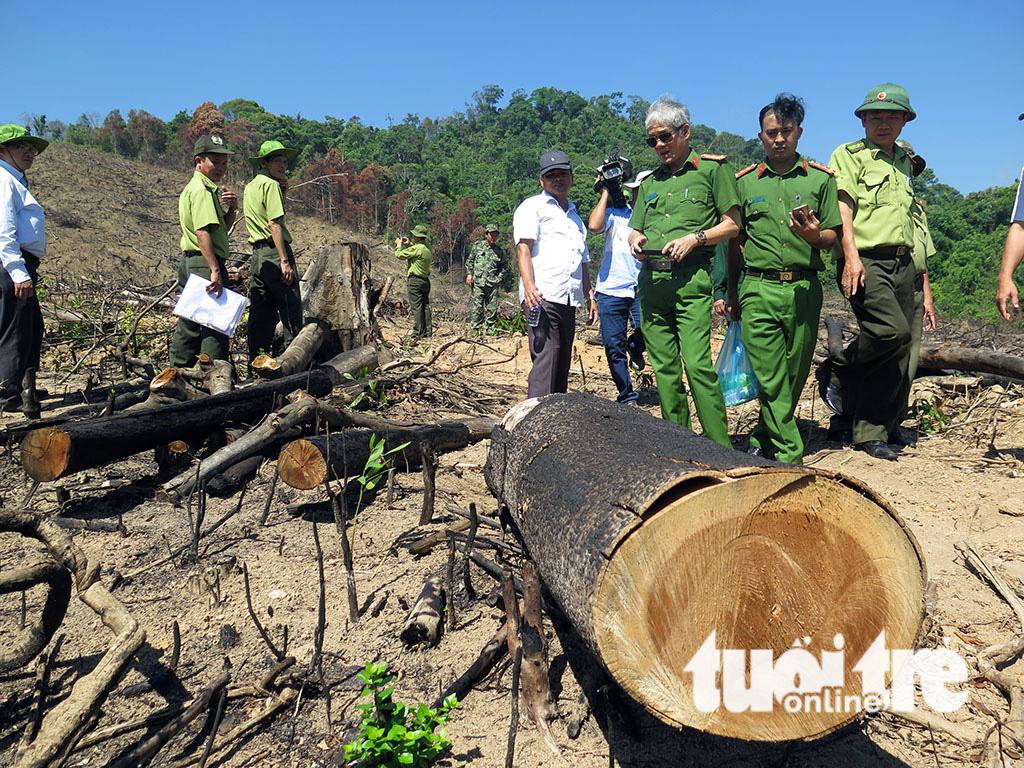 Cận cảnh 44ha rừng bị xóa sổ ở Bình Định - Ảnh 10.