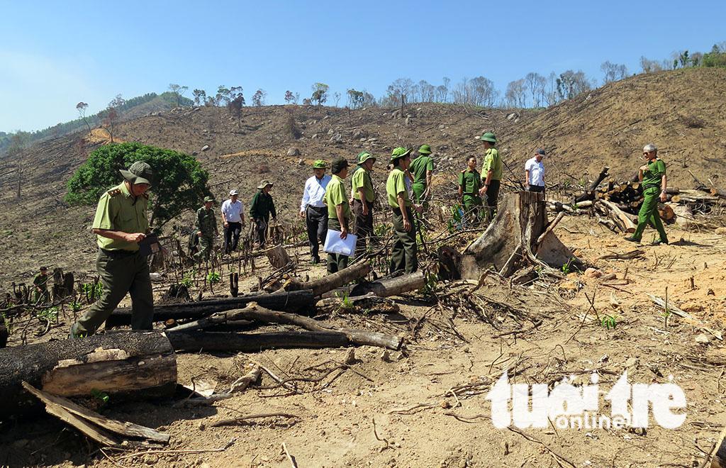 Cận cảnh 44ha rừng bị xóa sổ ở Bình Định - Ảnh 11.