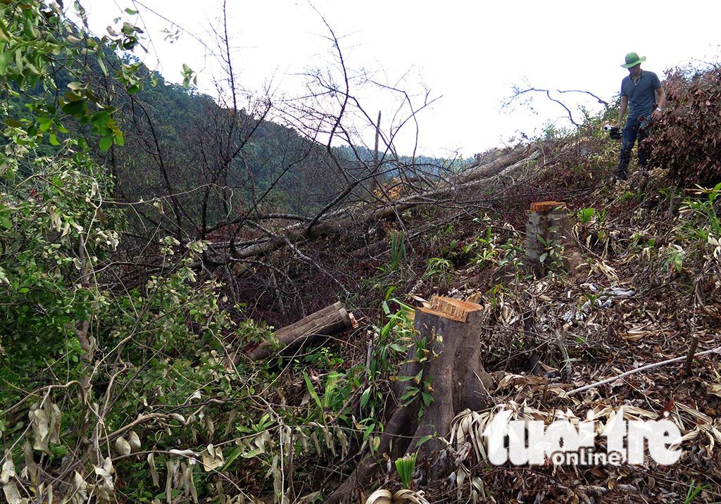 Cận cảnh 44ha rừng bị xóa sổ ở Bình Định - Ảnh 13.