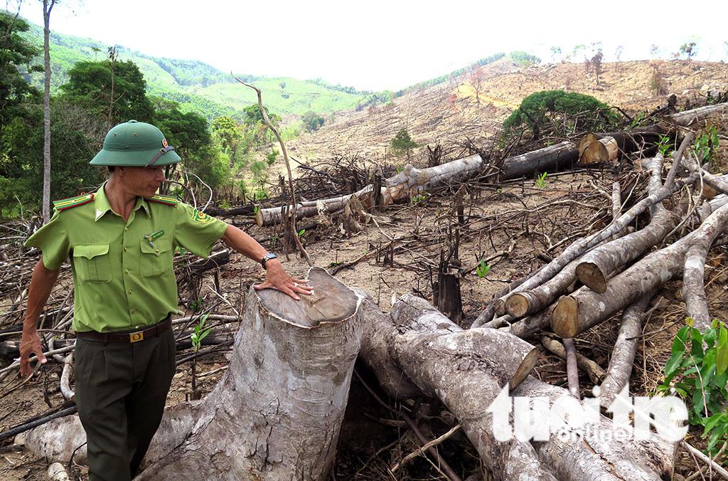 Cận cảnh 44ha rừng bị xóa sổ ở Bình Định - Ảnh 15.