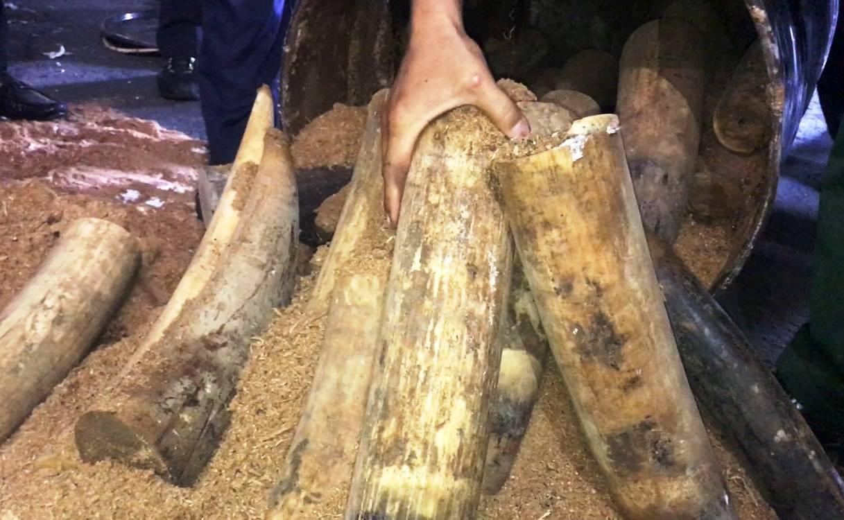 Bắt lô ngà voi lậu giấu trong 200 thùng phuy nhựa đường xuất khẩu - Ảnh 1.