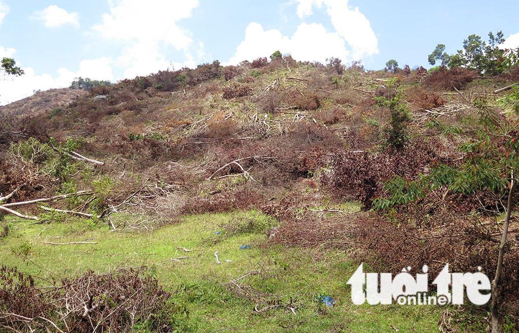 Cận cảnh 44ha rừng bị xóa sổ ở Bình Định - Ảnh 2.