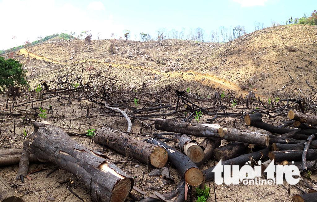 Cận cảnh 44ha rừng bị xóa sổ ở Bình Định - Ảnh 17.