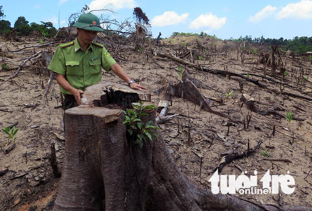 Cận cảnh 44ha rừng bị xóa sổ ở Bình Định - Ảnh 4.