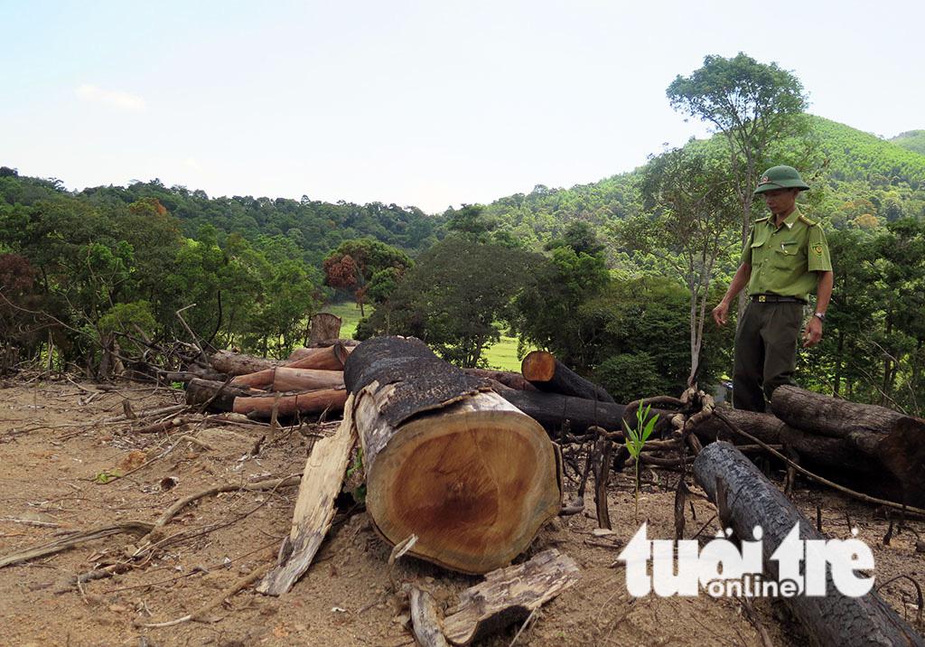 Cận cảnh 44ha rừng bị xóa sổ ở Bình Định - Ảnh 6.