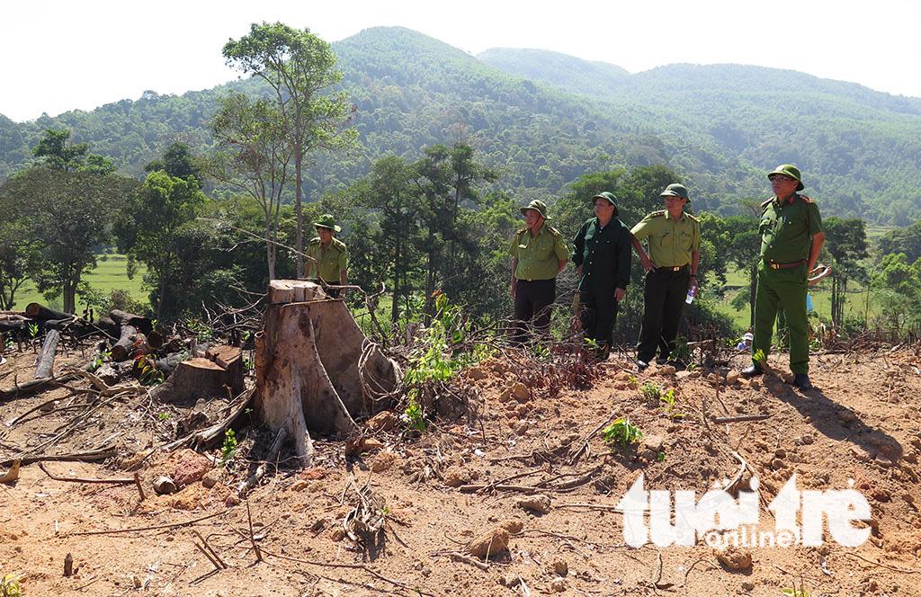 Cận cảnh 44ha rừng bị xóa sổ ở Bình Định - Ảnh 7.