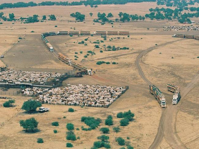 Dân Trung Quốc ồ ạt mua đất nông nghiệp Úc - Ảnh 1.
