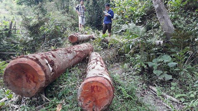 Hàng loạt lãnh đạo xã tham gia phát rừng trồng keo - Ảnh 1.