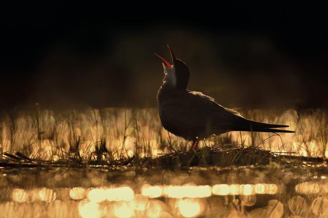 Ngắm thế giới chim chóc kỳ thú đoạt giải ảnh quốc tế - Ảnh 8.