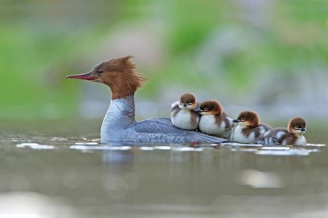 Ngắm thế giới chim chóc kỳ thú đoạt giải ảnh quốc tế - Ảnh 13.