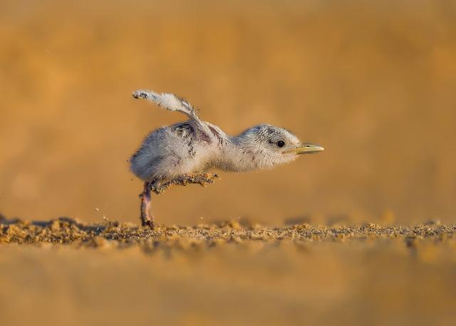 Ngắm thế giới chim chóc kỳ thú đoạt giải ảnh quốc tế - Ảnh 16.