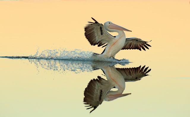 Ngắm thế giới chim chóc kỳ thú đoạt giải ảnh quốc tế - Ảnh 4.