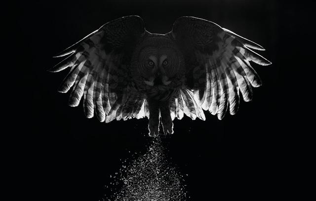 Ngắm thế giới chim chóc kỳ thú đoạt giải ảnh quốc tế - Ảnh 2.