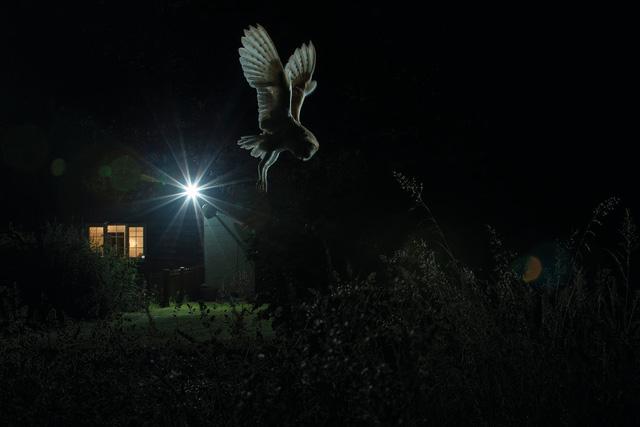 Ngắm thế giới chim chóc kỳ thú đoạt giải ảnh quốc tế - Ảnh 6.