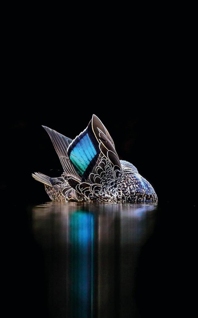 Ngắm thế giới chim chóc kỳ thú đoạt giải ảnh quốc tế - Ảnh 9.