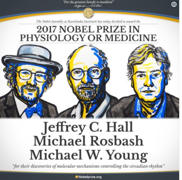 Tìm ra gen điều khiển nhịp độ sinh học đoạt Nobel Y học - Ảnh 1.