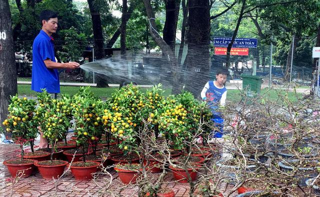 Dân Sài Gòn đủ chợ hoa để chưng tết - Ảnh 2.