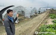 Nhà nước chặn lao động nhập cư, nông dân Hàn Quốc khốn đốn