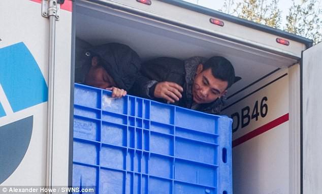 Image result for người việt trốn xe hơi đông lạnh vào anh