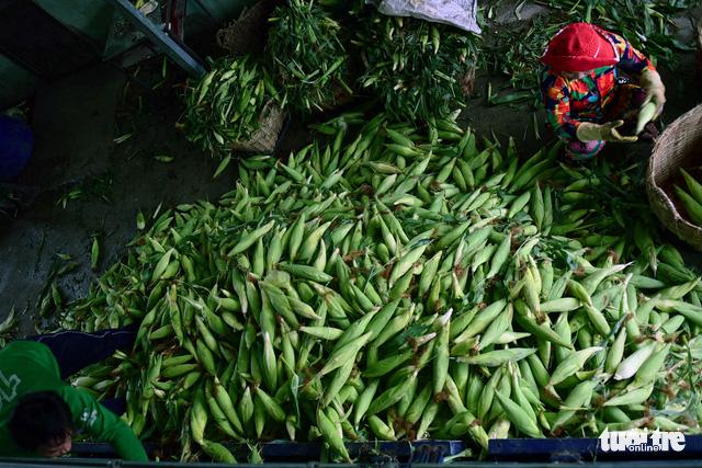 Tấp nập kẻ mua người bán tại chợ bắp lớn nhất Sài Gòn - Ảnh 3.
