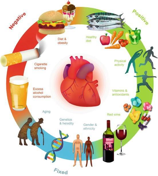 Cách kiểm soát các yếu tố nguy cơ tim mạch - Ảnh 1.