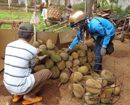Giá sầu riêng tại Đắk Lắk tăng gần gấp đôi so với năm ngoái - Ảnh 1.