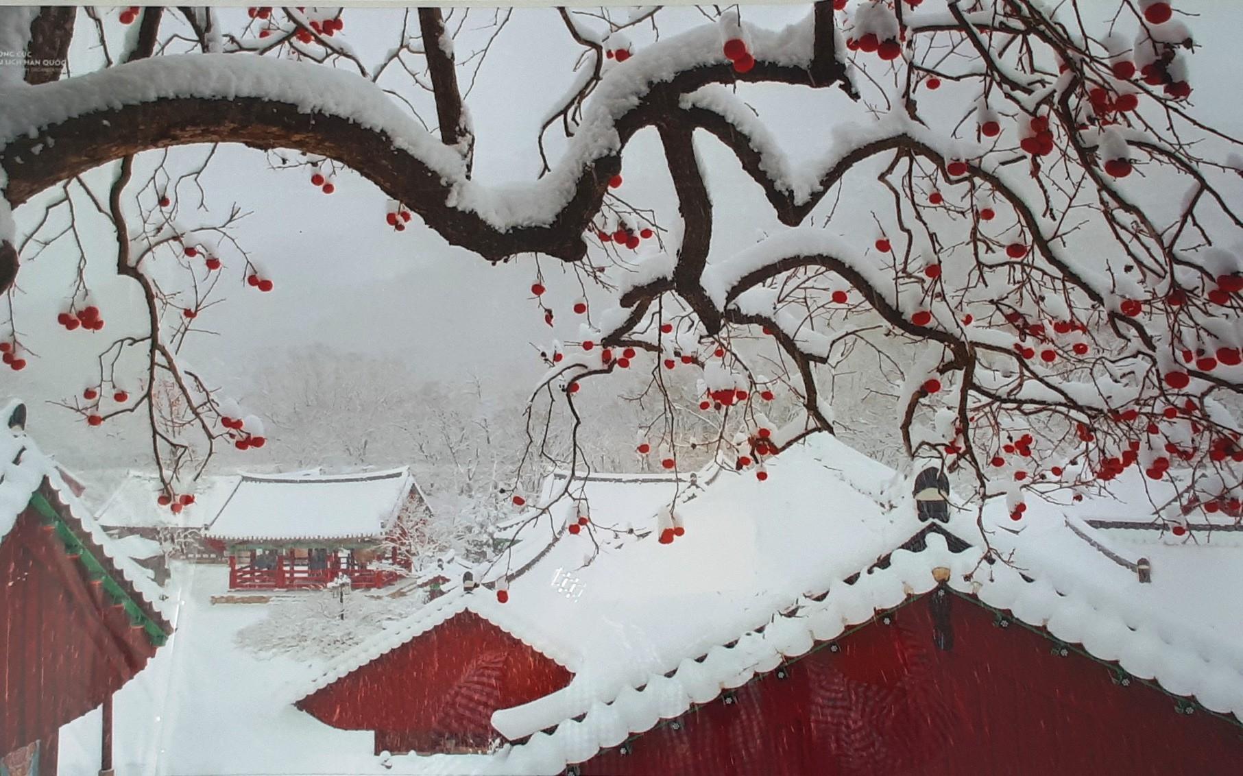 ảnh phong cảnh đẹp mùa đông