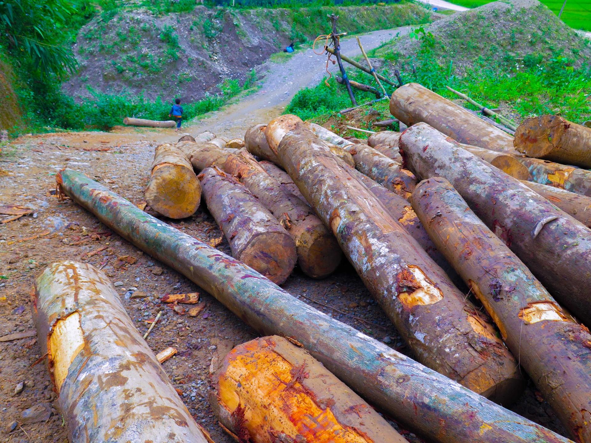 Tan nát rừng đầu nguồn: Cận cảnh rừng phòng hộ bị phá - Ảnh 1.