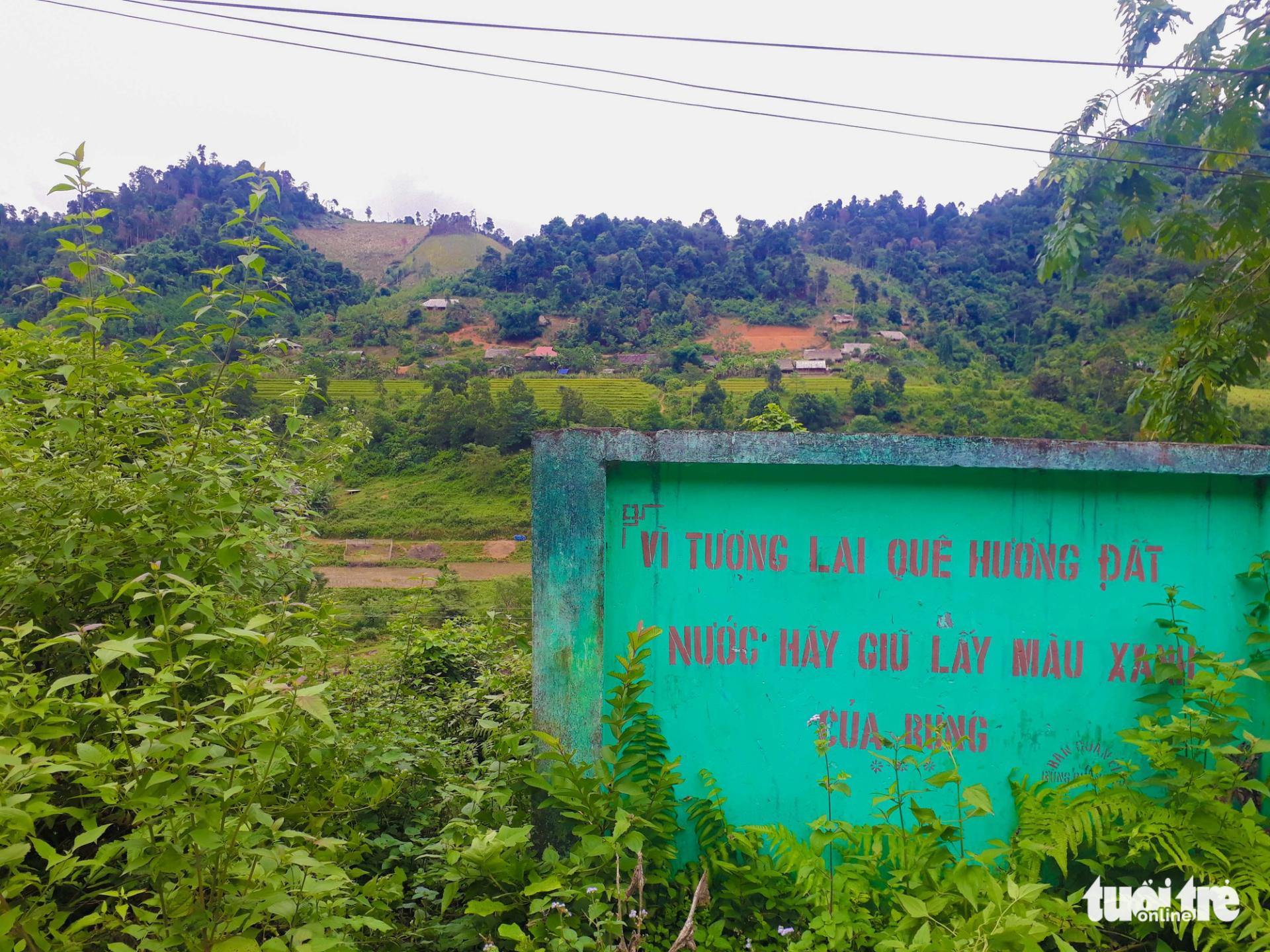 Tan nát rừng đầu nguồn: Cận cảnh rừng phòng hộ bị phá - Ảnh 10.