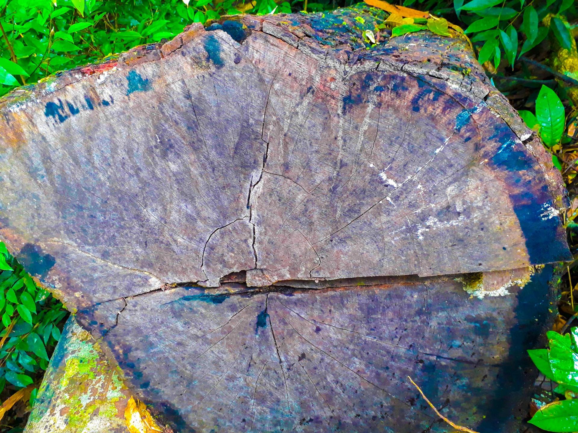 Tan nát rừng đầu nguồn: Cận cảnh rừng phòng hộ bị phá - Ảnh 2.