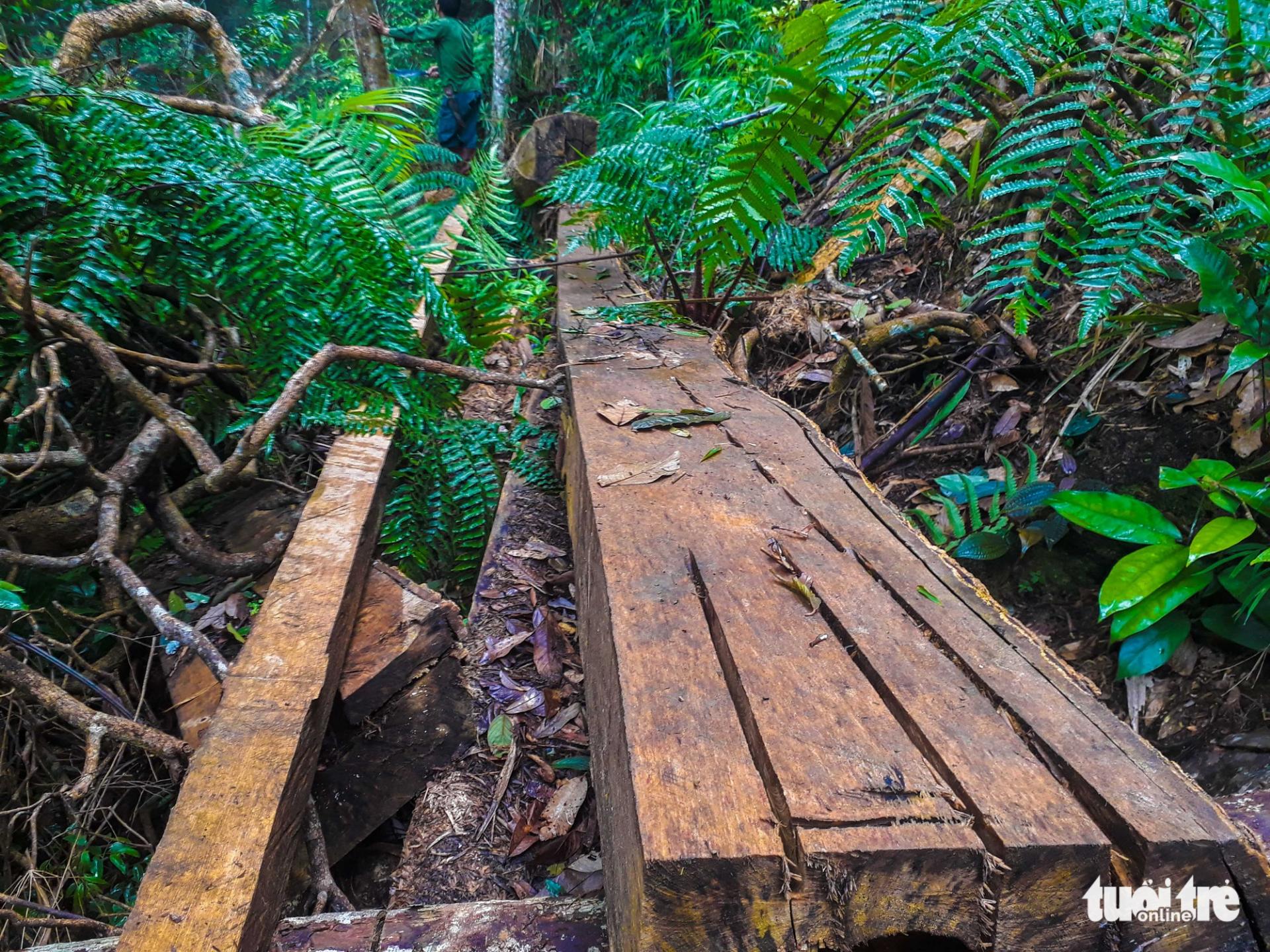 Tan nát rừng đầu nguồn: Cận cảnh rừng phòng hộ bị phá - Ảnh 5.