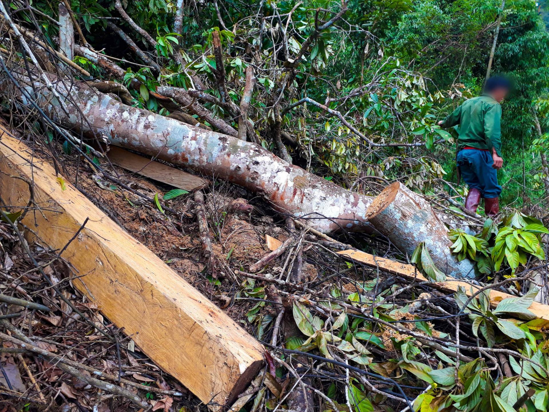 Tan nát rừng đầu nguồn: Cận cảnh rừng phòng hộ bị phá - Ảnh 4.
