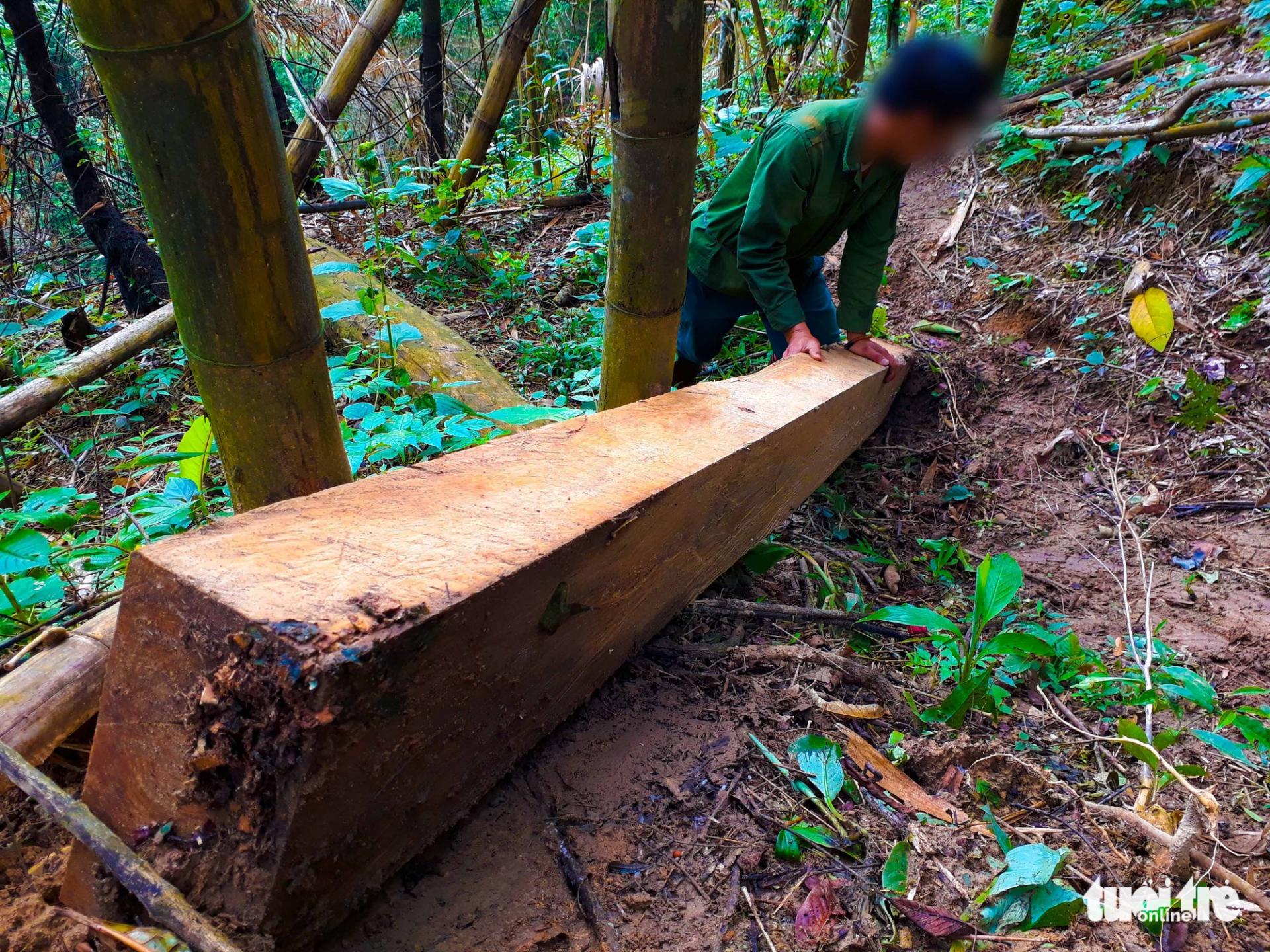 Tan nát rừng đầu nguồn: Cận cảnh rừng phòng hộ bị phá - Ảnh 7.