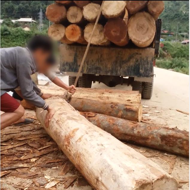 Tan nát rừng đầu nguồn: Cận cảnh rừng phòng hộ bị phá - Ảnh 8.