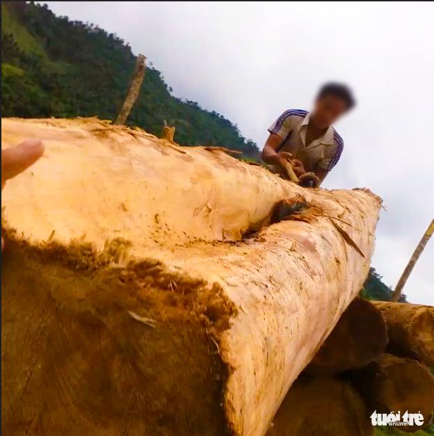 Tan nát rừng đầu nguồn: Cận cảnh rừng phòng hộ bị phá - Ảnh 9.