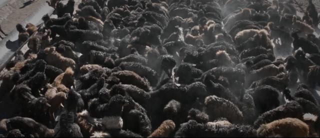 Kinh hoàng với bầy chó ngao Tây Tạng thả rông ở Trung Quốc - Ảnh 2.