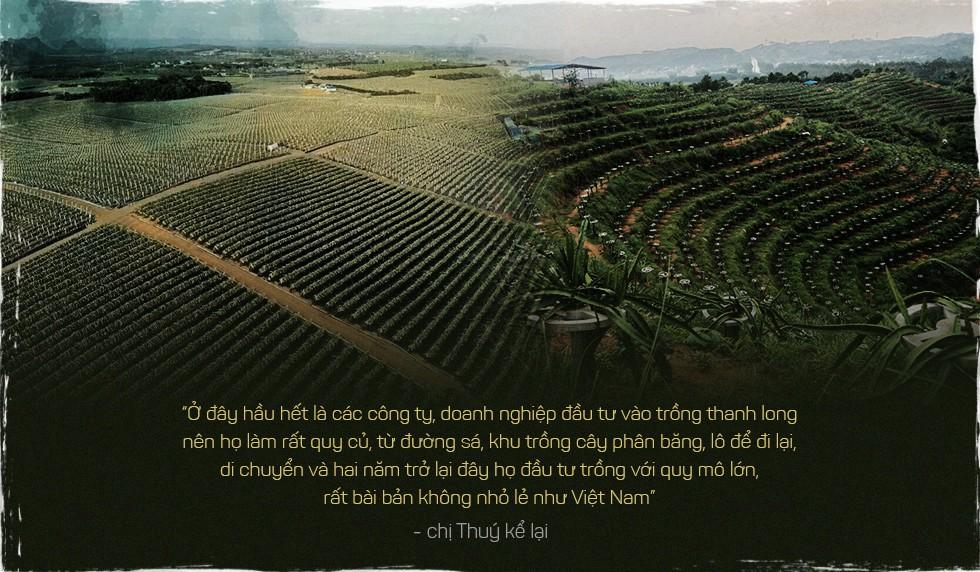 Trung Quốc ồ ạt trồng thanh long cạnh tranh với Việt Nam - Ảnh 2.