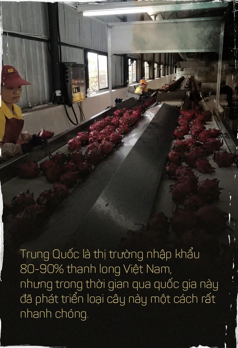 Trung Quốc ồ ạt trồng thanh long cạnh tranh với Việt Nam - Ảnh 4.