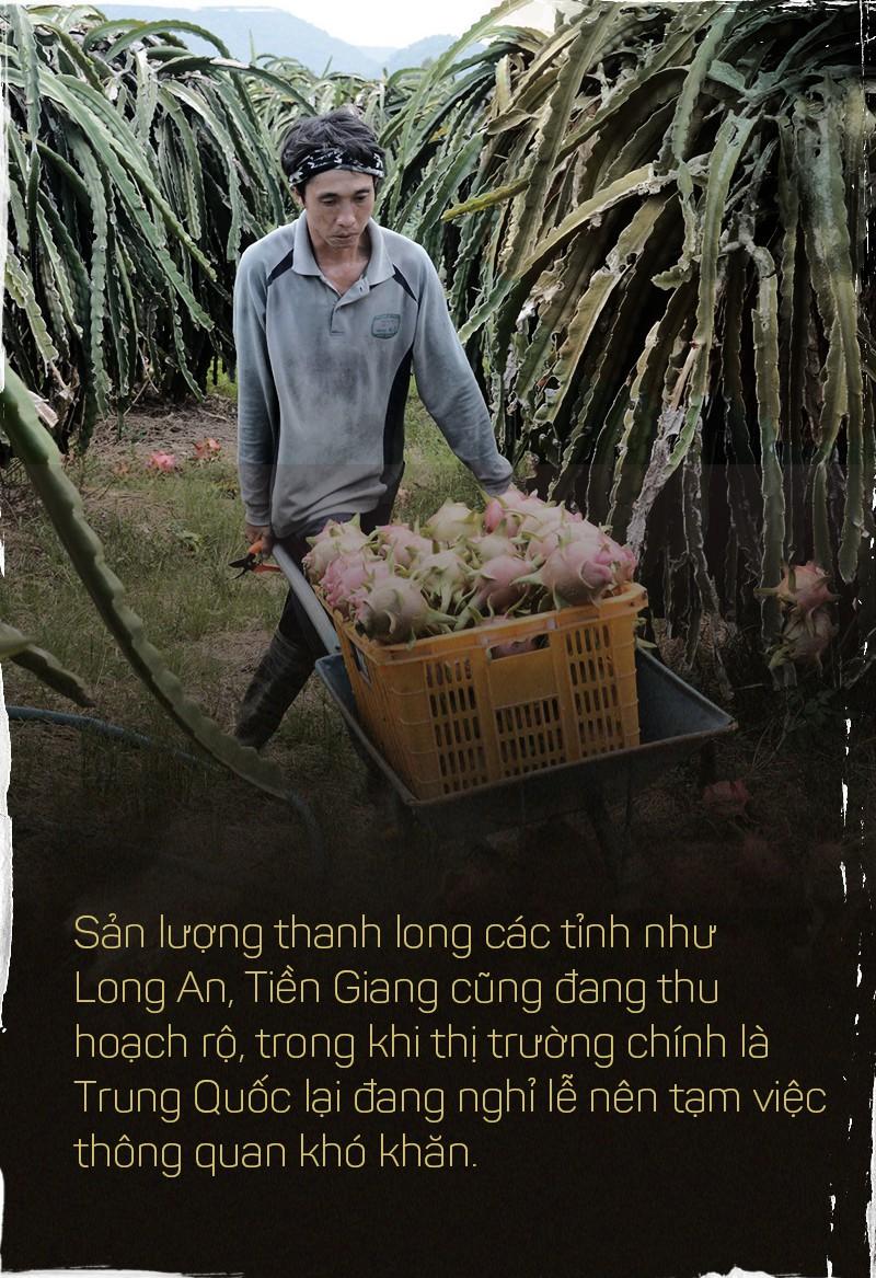 Trung Quốc ồ ạt trồng thanh long cạnh tranh với Việt Nam - Ảnh 8.