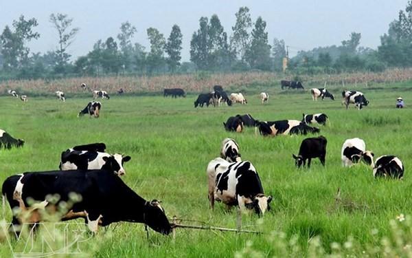 TP.HCM Ban hành danh mục nhóm sản phẩm chủ lực của ngành nông nghiệp - Ảnh 1.