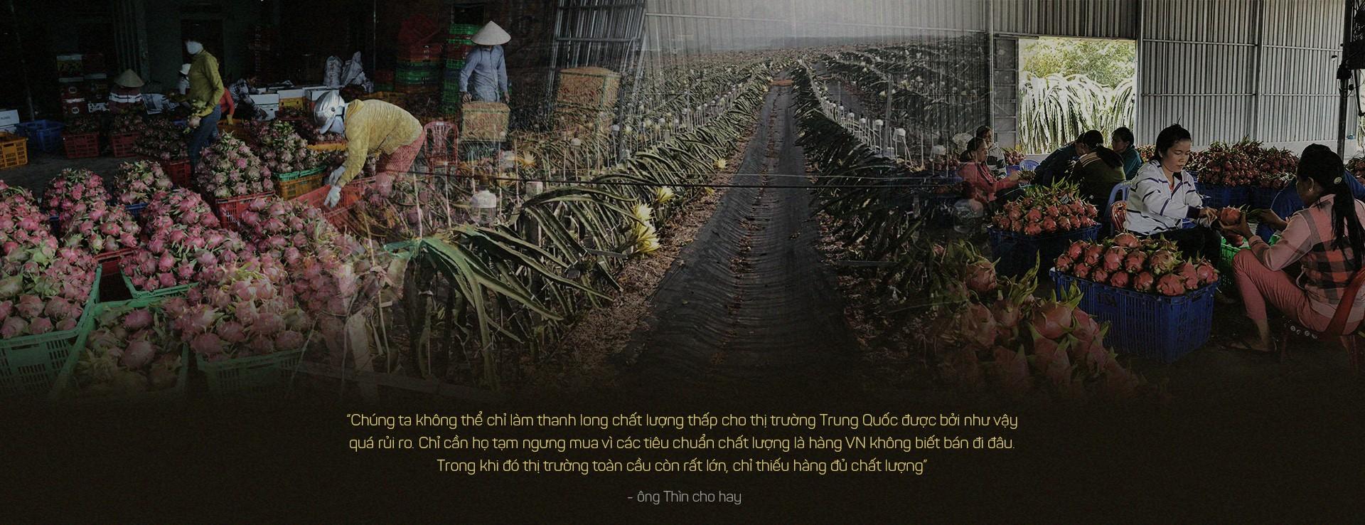 Trung Quốc ồ ạt trồng thanh long cạnh tranh với Việt Nam - Ảnh 10.