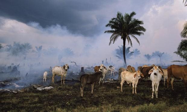Tàn sát quá nửa động vật, con người đang giết tương lai của mình - Ảnh 1.