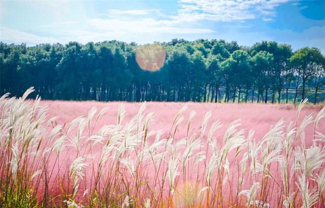 Mùa hội cỏ hồng Lâm Đồng sẽ diễn ra từ ngày 24-11 - Ảnh 1.