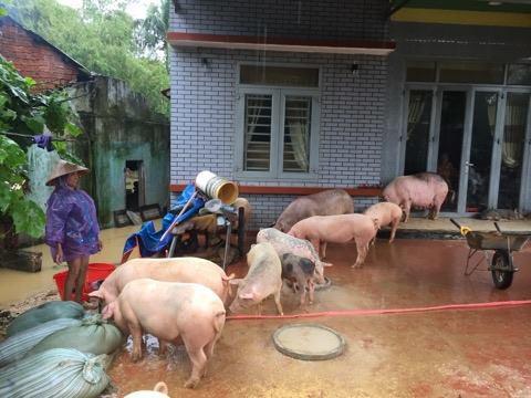 Quốc lộ 1 qua Quảng Nam tê liệt, Quân khu 5 huy động lực lượng cứu dân - Ảnh 6.
