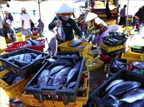 Công bố nhãn hiệu Cá ngừ đại dương Bình Định - Ảnh 1.