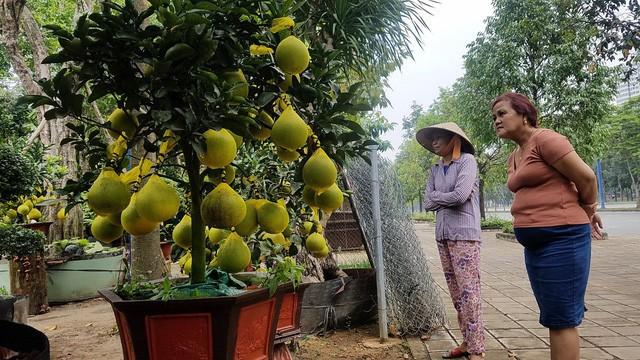 Bưởi Diễn chưng Tết đã có ở TP.HCM, giá cao nhất 65 triệu đồng/cây - Ảnh 2.