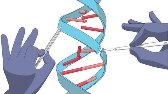 Chỉnh sửa gen - kỹ thuật và đạo đức - Ảnh 2.