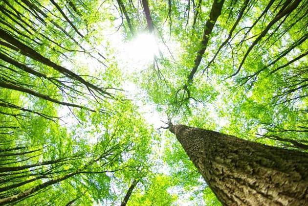 Tuổi thơ cùng những cánh rừng - Ảnh 2.