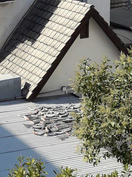 Vây cá mập mua ngoài chợ Chile để sử dụng trong nhà - Ảnh 1.